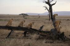טיול משפחות לטנזניה