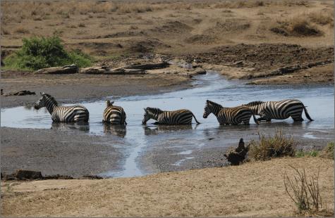 טיול מאורגן לטנזניה - אפריקה