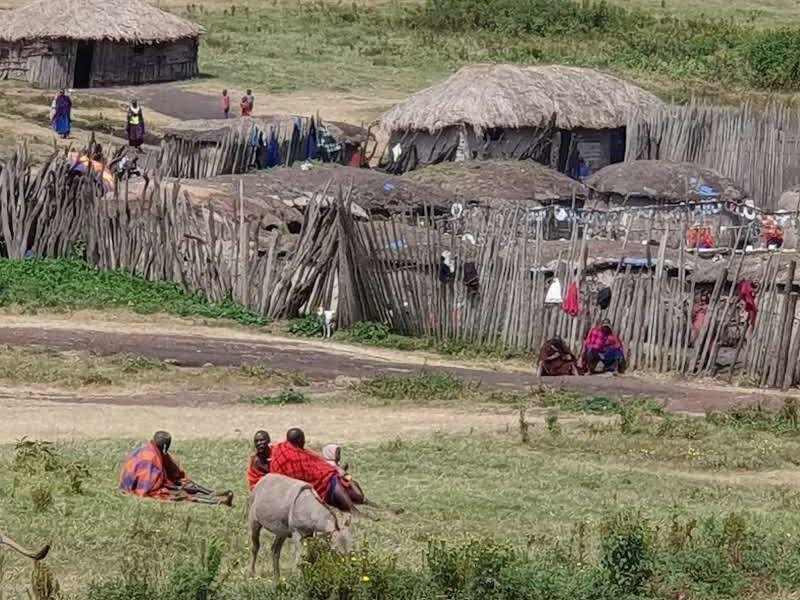 שמורת המסאיים במכתש Ngorongoro- טנזניה