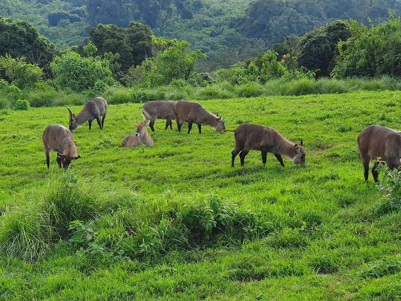 חיות ב - Rhino Lodge בשמורת המכתש ב- Ngorongoro, טנזניה.