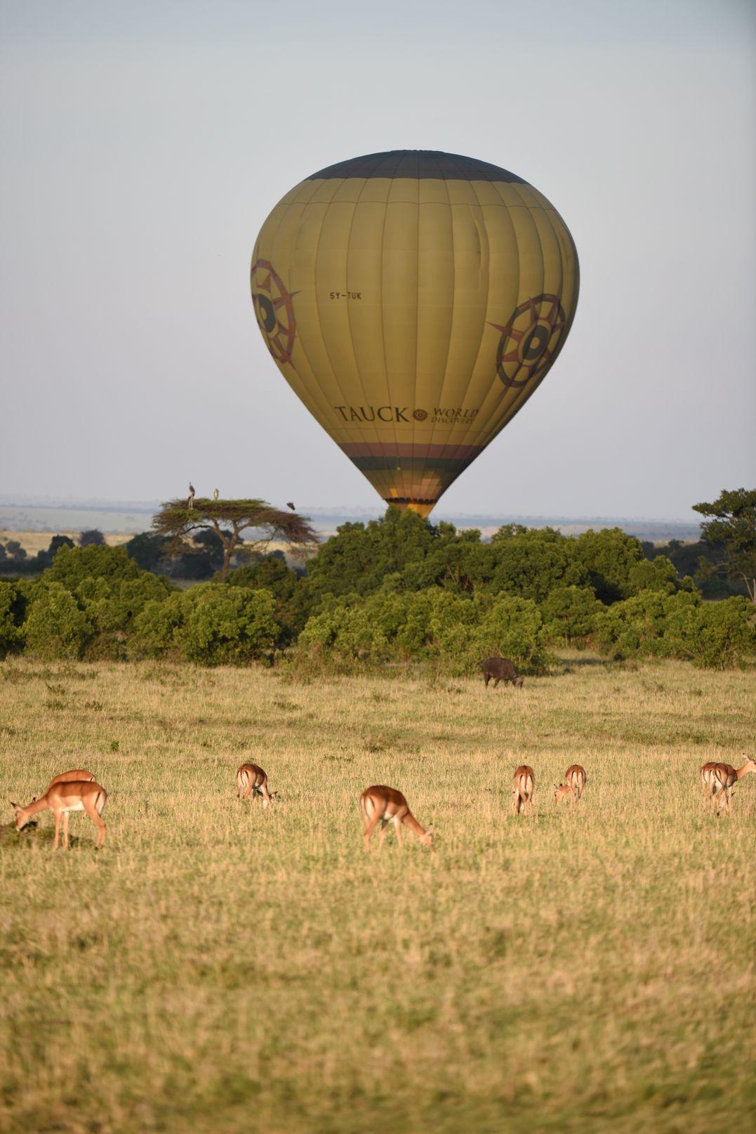 טיול בכדור פורח בספארי בקניה