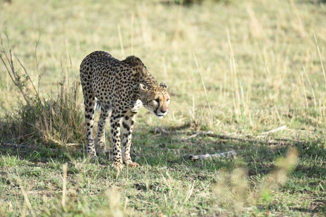 ברדלס בספארי בקניה