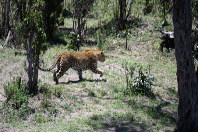 הטבע הפראי בטיול ספארי בקניה