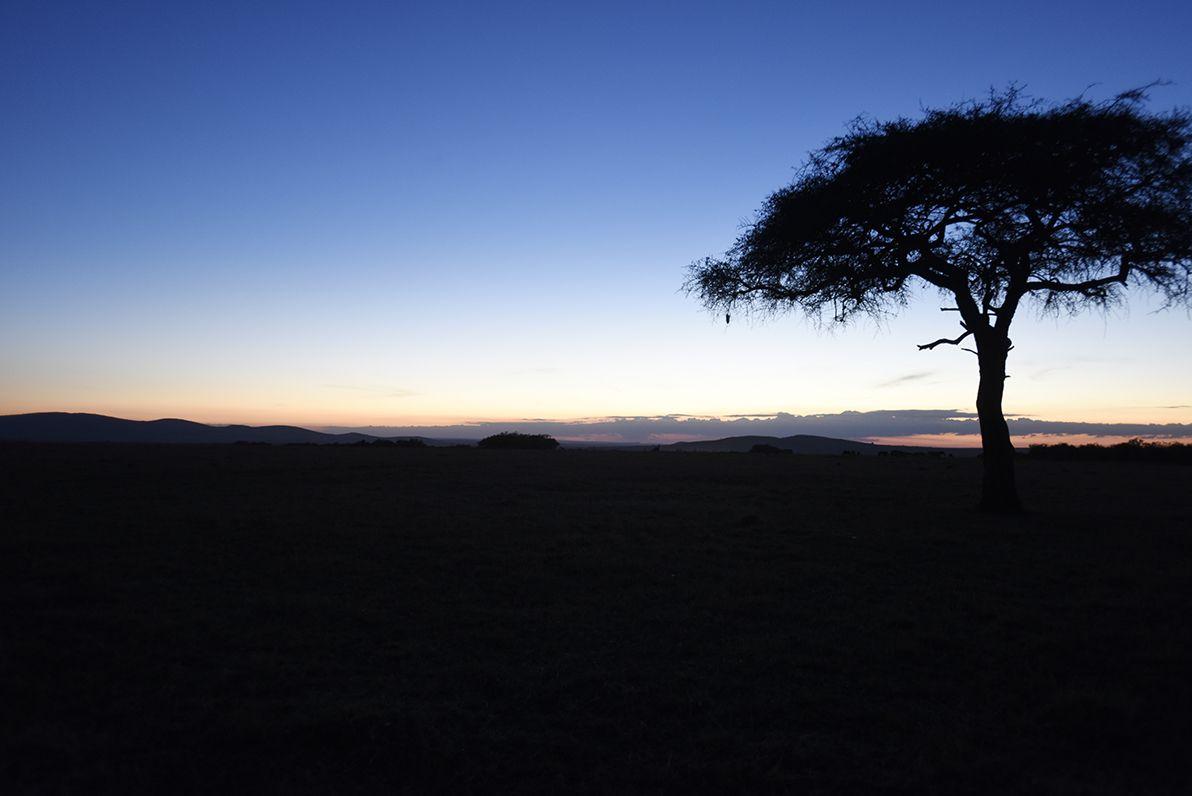 שקיעה בספארי בקניה