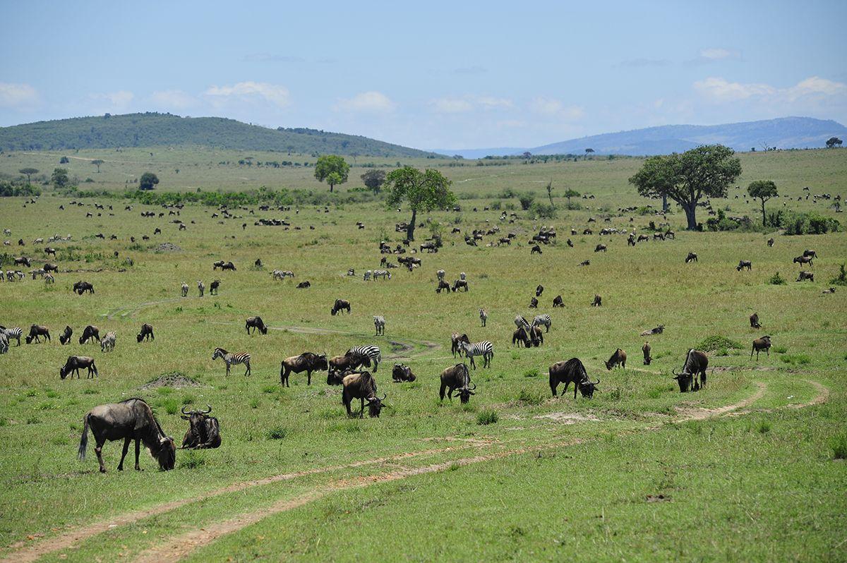 טיולי ספארי בקניה