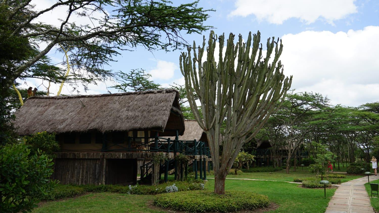 לודג׳ בשמורת הסאפרי באפריקה