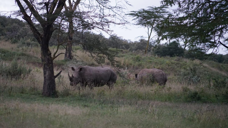 קנרפים בספארי באפריקה