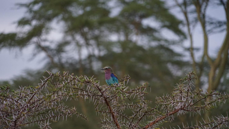 ציפור בספארי באפריקה