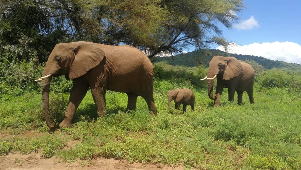 שמורת הפילים Tarangire בטנזניה