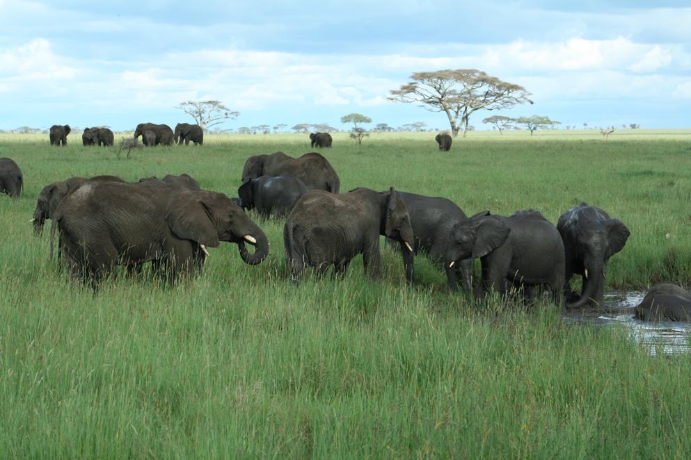 טיולי ספארי לאפריקה