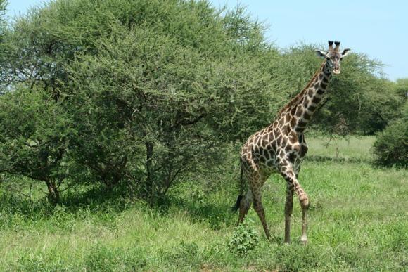טנזניה טיול מאורגן