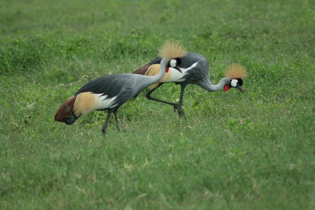 טיול מאורגן - ספארי טנזניה