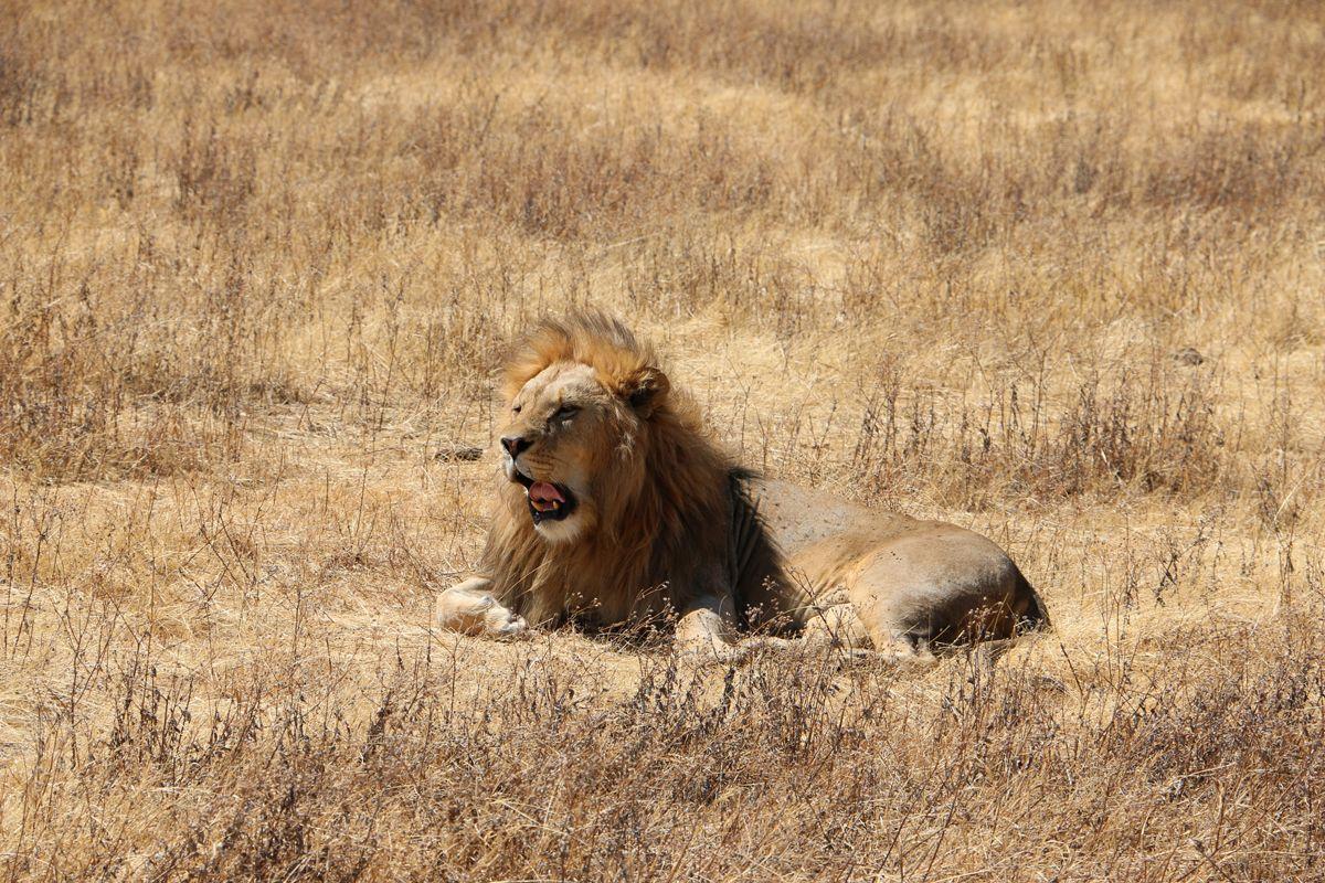 טיול ספארי בטנזניה- לטייל עם רייצ'ל