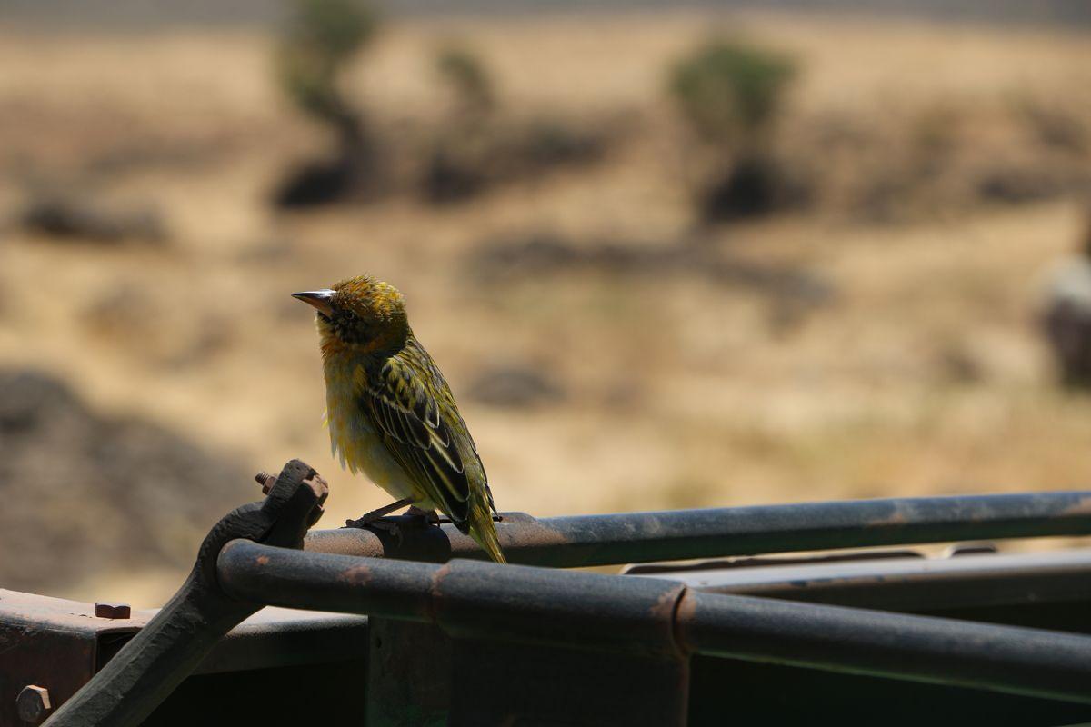 ציפורים מיוחדות במכתש Ngorongoro בטנזניה