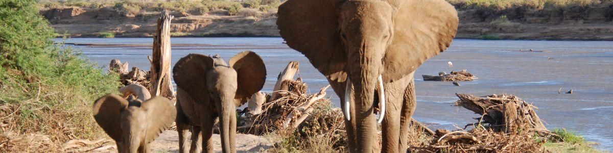 פילים באגם בספארי בקניה