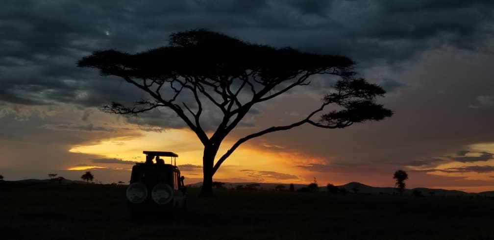 המלצות לספארי בטנזניה