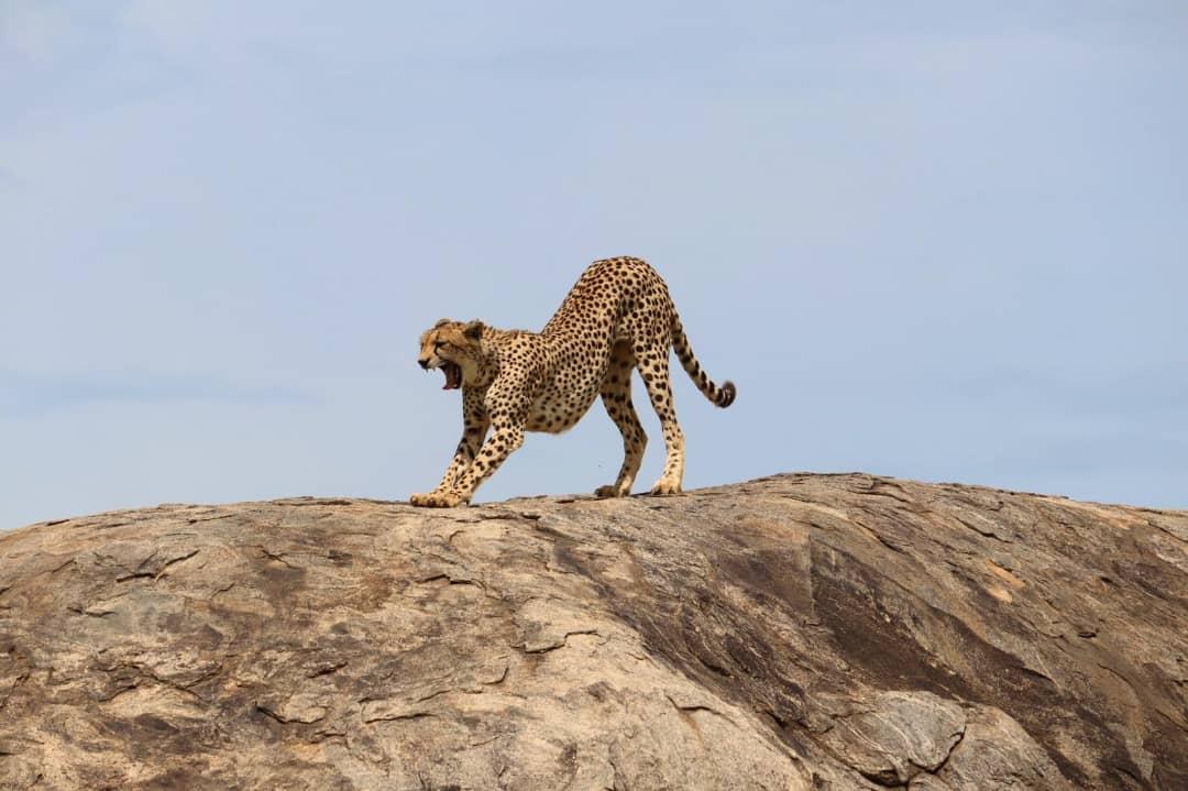 תמונות של ספארי טנזניה