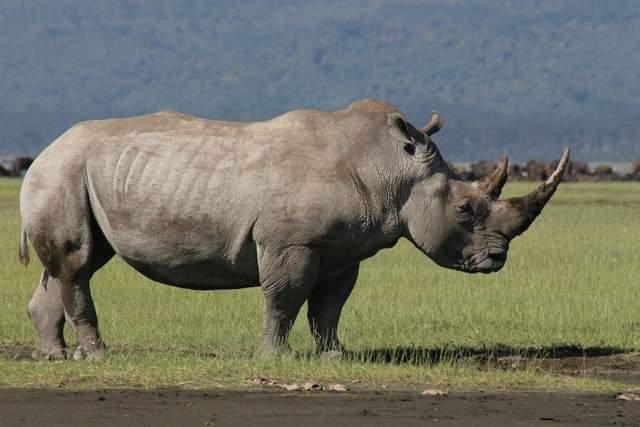 תמונות ספארי קניה