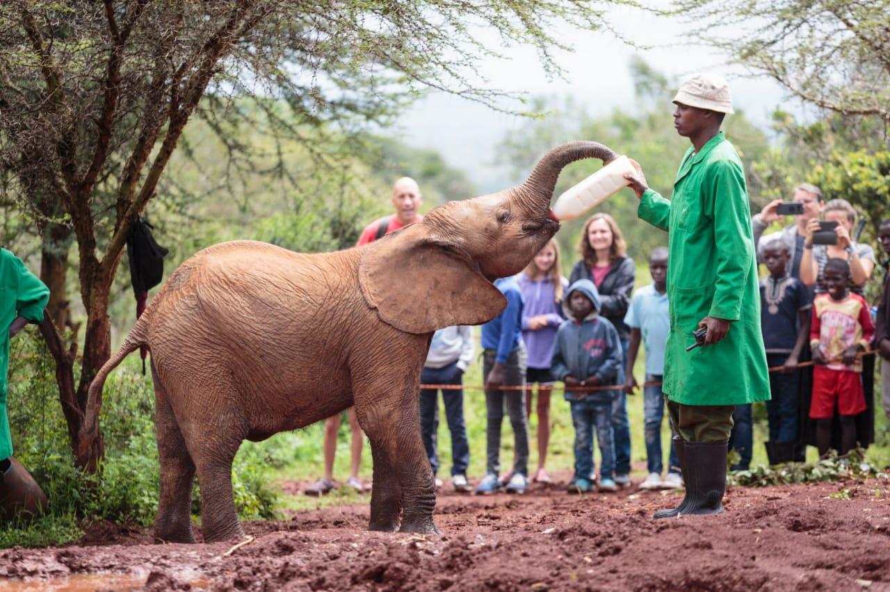 ניירובי בירת קניה