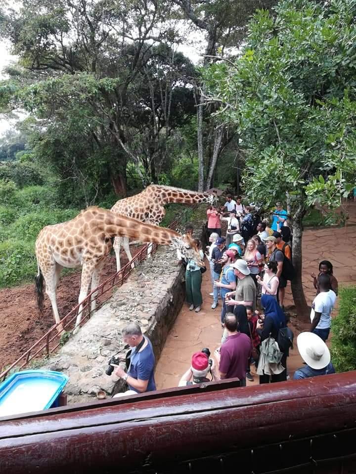 טיול מאורגן לקניה - תמונות