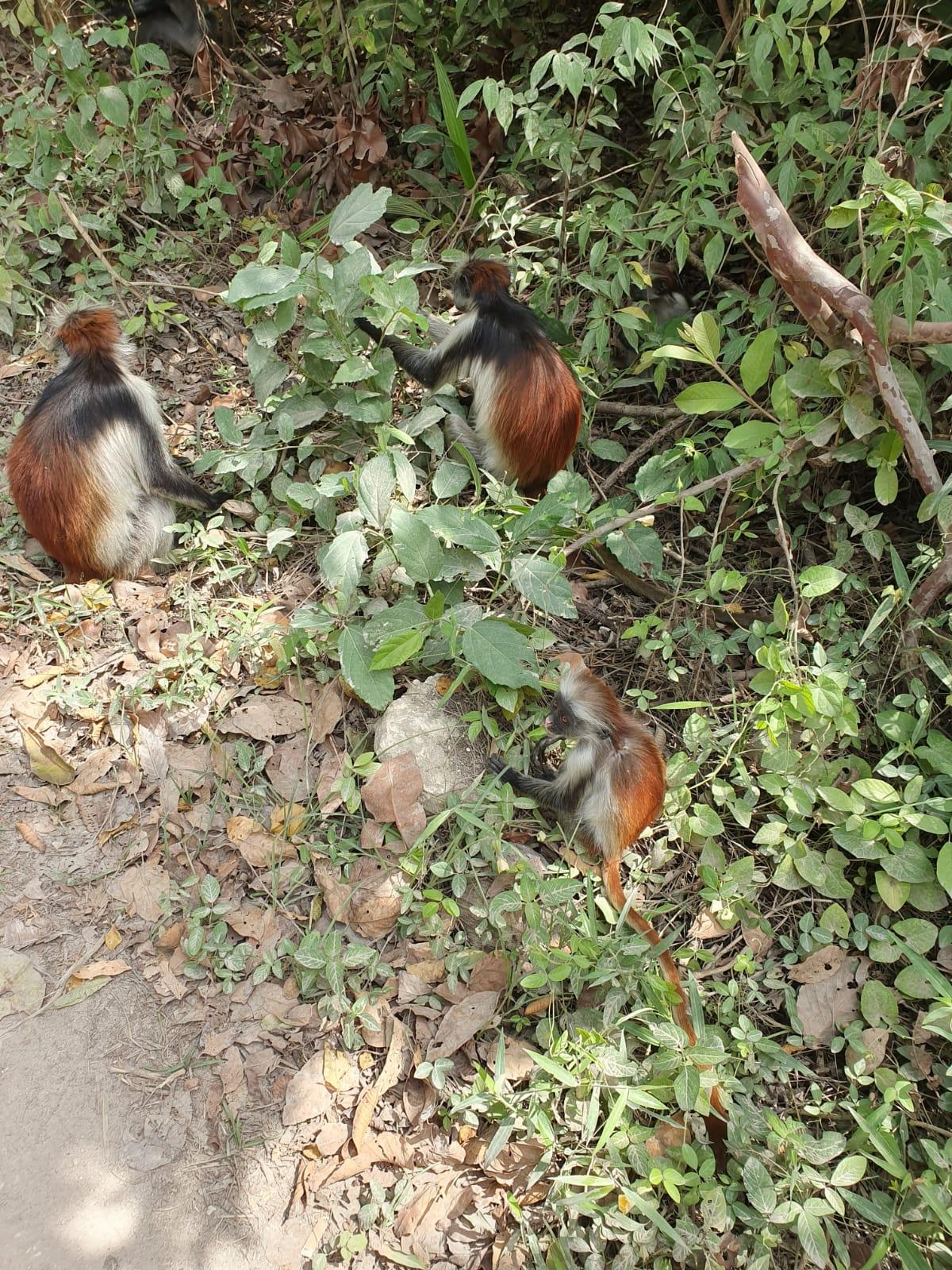 טיול מאורגן לזנזיבר וטנזניה