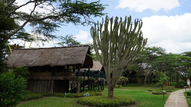טיול ספרי בקניה