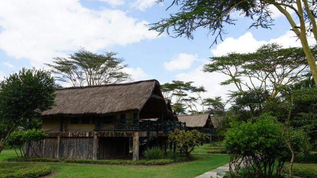ספארי קניה