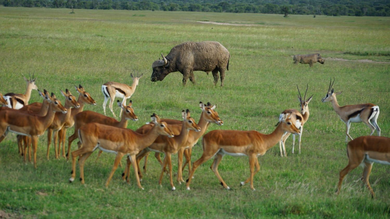 ספארי בקניה - מטיילים עם רייצ'ל