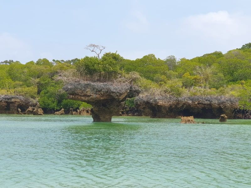 עץ בתוך אגם ספארי בלו