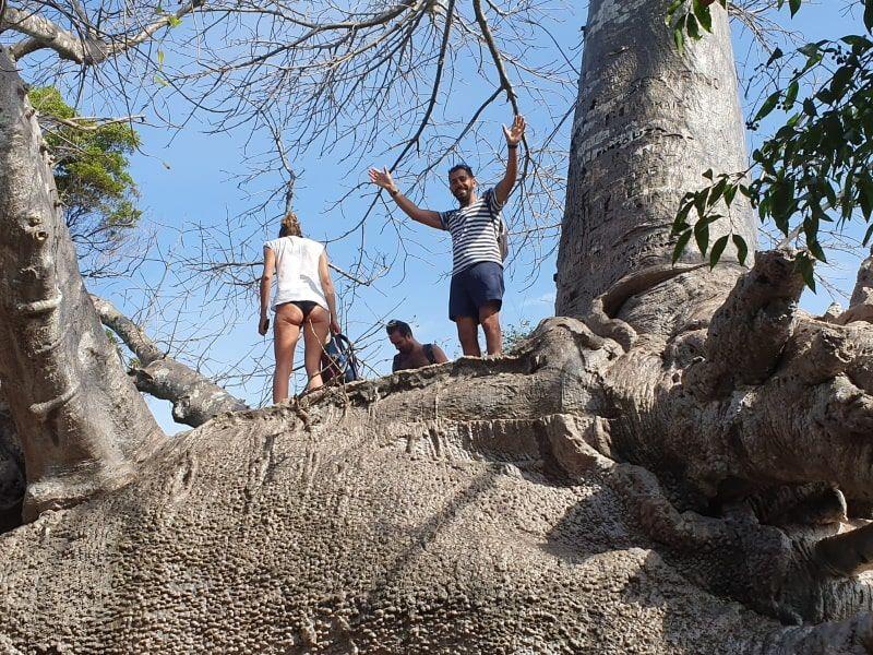 טיפוס על עץ בטיול ספארי בלו