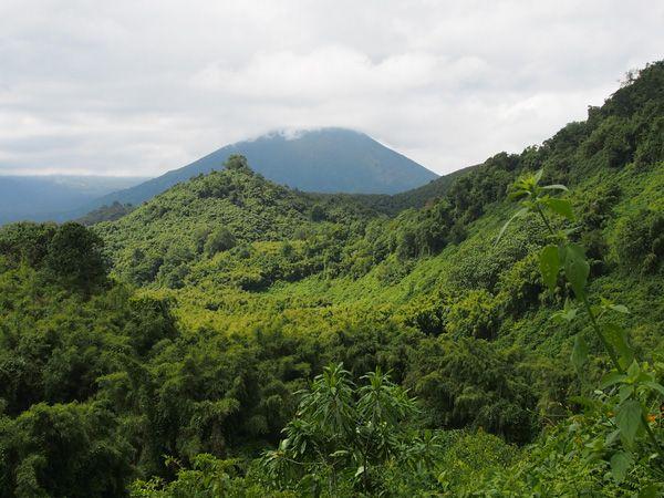 טיול ביער הגשם Nyungwe ברואנדה