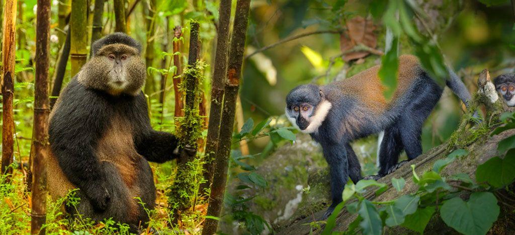 טיול לצמרות העצים יער ניונגווה